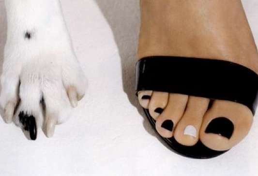 Manicure female foot next to manicured dog paw in black and white.