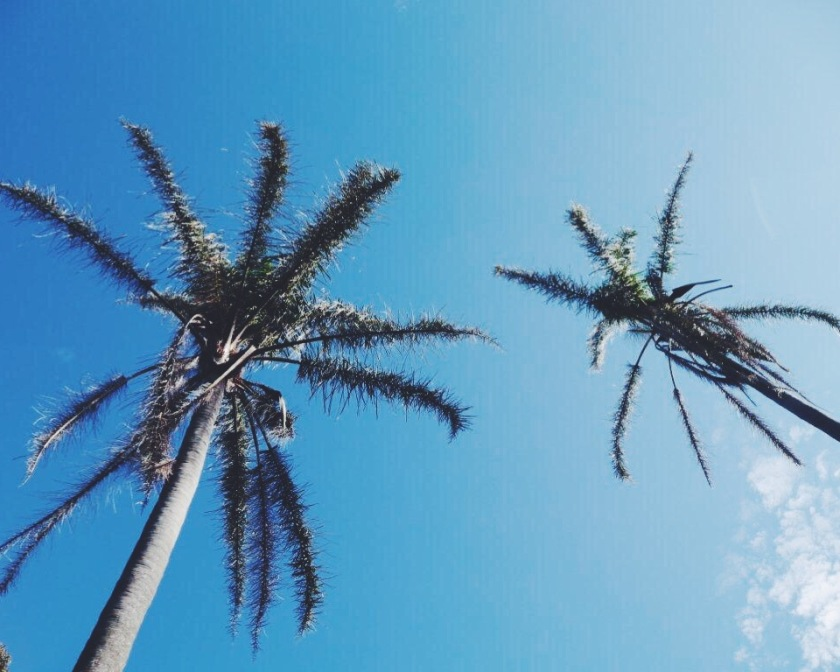 Palm Trees in Centennial Park