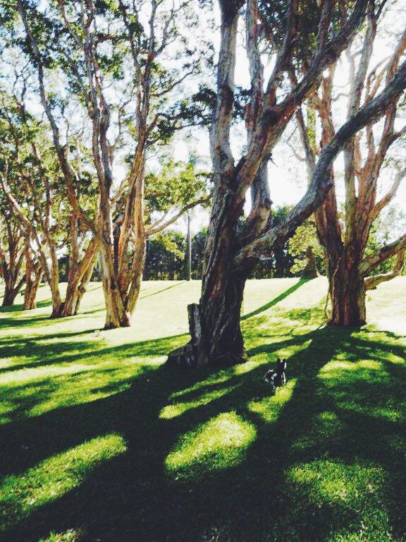 Paperback Trees